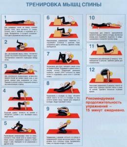 Упражнения для тренировки мышц спины