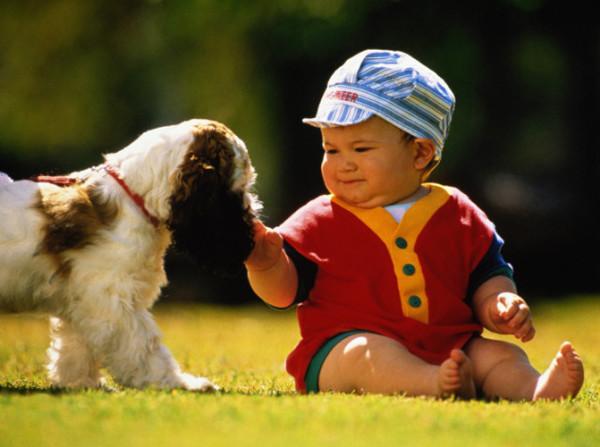 Очень важно приучать детей с раннего возраста к гигиене, ведь даже простое поглаживание животного может грозить серьезными заболеваниями