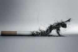 Курение - причина бронхита