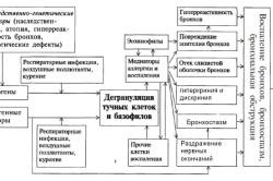 Схема патогенеза бронхиальной астмы
