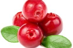 Польза клюквы для лечения неприятного запаха