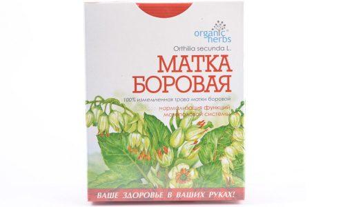 Боровая матка (ортилия однобокая) относится к числу наиболее популярных и эффективных целебных растений, используемых в лечении целого ряда различных заболеваний
