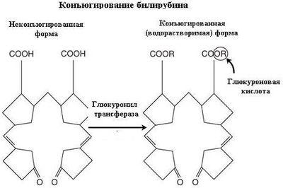 характеристики билирубина