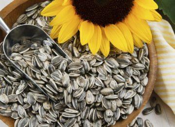 Можно ли употреблять семечки при панкреатите