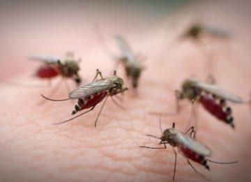 Чем снять зуд от комаров